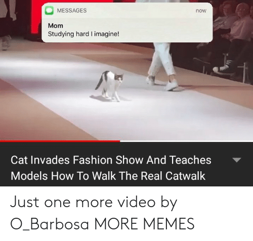 Just One More: MESSAGES  now  Mom  Studying hard I imagine!  Cat Invades Fashion Show And Teaches  Models How To Walk The Real Catwalk Just one more video by O_Barbosa MORE MEMES