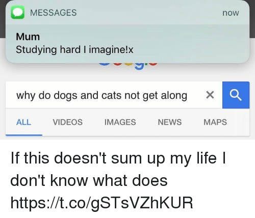 Cats, Dogs, and Life: MESSAGES  now  Mum  Studying hard I imagine!x  why do dogs and cats not get along  ALL VIDEOS IMAGES NEWS  MAPS If this doesn't sum up my life I don't know what does https://t.co/gSTsVZhKUR