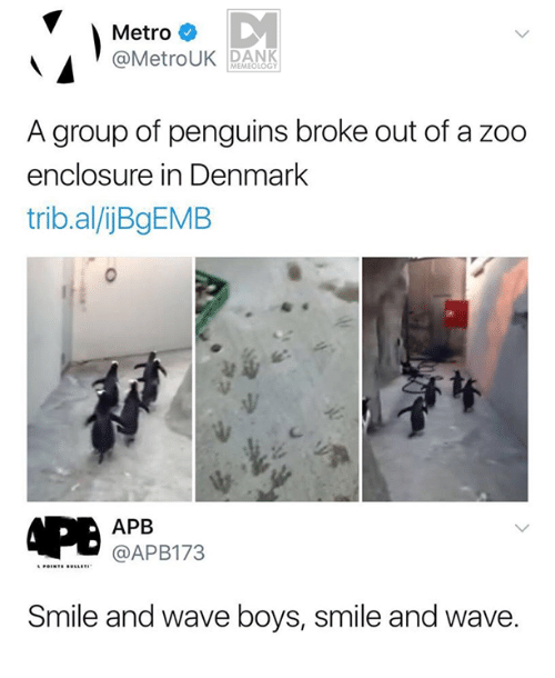 Dank, Denmark, and Metro: Metro  @MetroUK DANK  MEMEOLOGY  A group of penguins broke out of a zoo  enclosure in Denmark  trib.al/ijBgEMB  APB  @APB173  Smile and wave boys, smile and wave