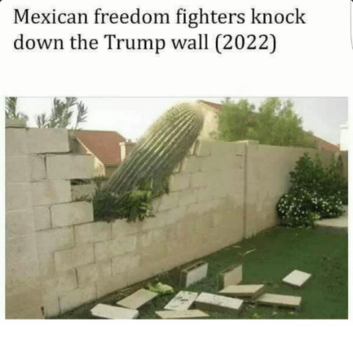 freedom fighters: Mexican freedom fighters knock  down the Trump wall (2022)