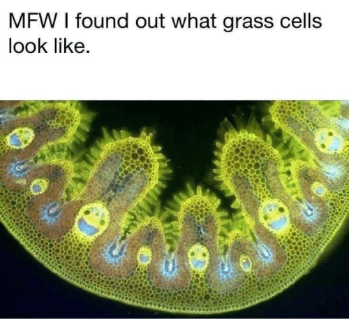 Mfw, Grass, and What: MFW I found out what grass cells  look like