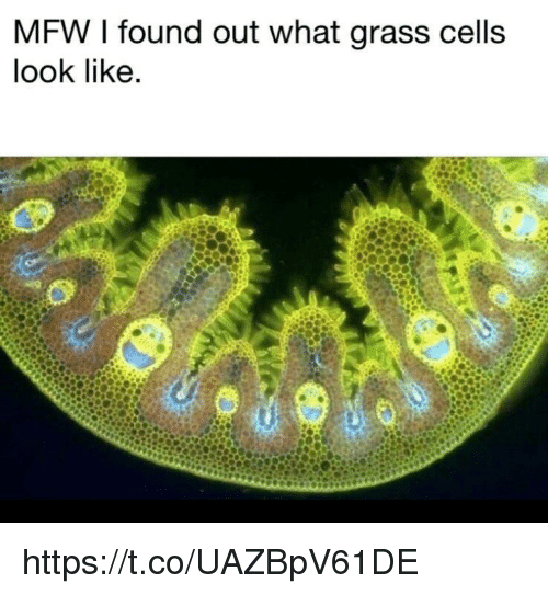 Memes, Mfw, and 🤖: MFW I found out what grass cells  look like https://t.co/UAZBpV61DE