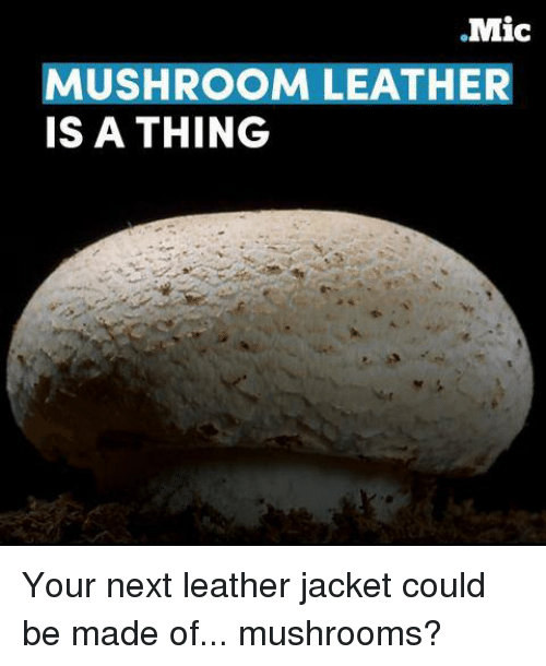 Memes, 🤖, and Mushroom: .Mic  MUSHROOM LEATHER  IS A THING Your next leather jacket could be made of... mushrooms?