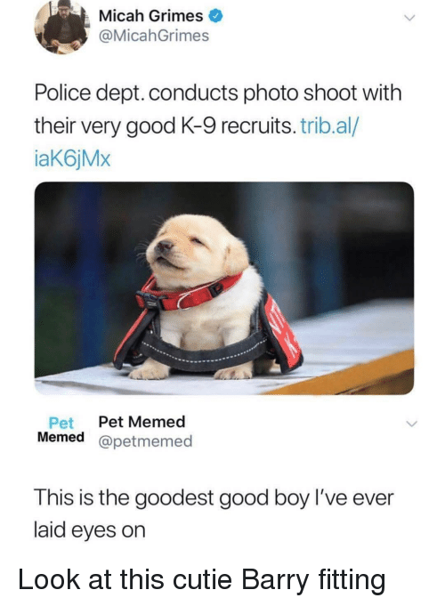 photo shoot: Micah Grimes  @MicahGrimes  Police dept. conducts photo shoot with  their very good K-9 recruits. trib.al/  aK6jMx  Pet Pet Memed  Memed @petmemed  This is the goodest good boy l've ever  laid eyes on Look at this cutie Barry fitting