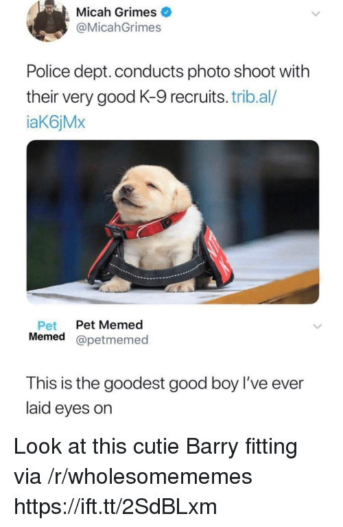 photo shoot: Micah Grimes  @MicahGrimes  Police dept. conducts photo shoot with  their very good K-9 recruits. trib.al/  aK6jMx  Pet Pet Memed  Memed @petmemed  This is the goodest good boy l've ever  laid eyes on Look at this cutie Barry fitting via /r/wholesomememes https://ift.tt/2SdBLxm