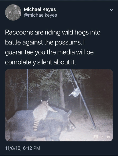 hogs: Michael Keyes  @michaelkeyes  Raccoons are riding wild hogs into  battle against the possums.  guarantee you the media will be  completely silent about it.  14  11/8/18, 6:12 PM