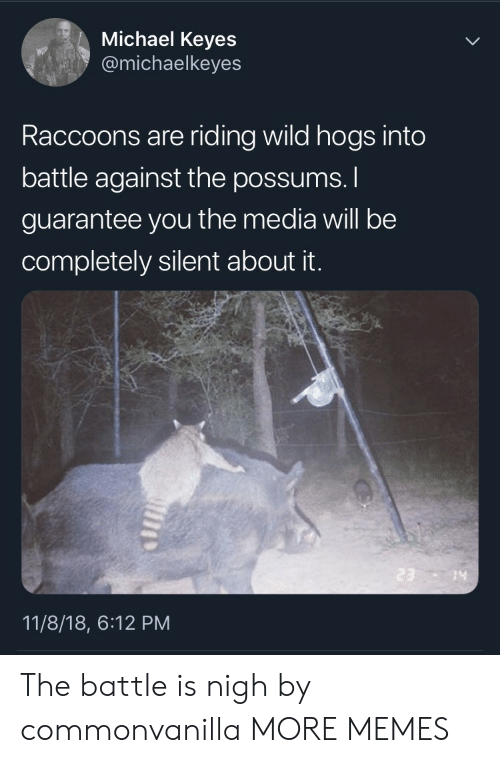 hogs: Michael Keyes  @michaelkeyes  Raccoons are riding wild hogs into  battle against the possums.  guarantee you the media will be  completely silent about it.  14  11/8/18, 6:12 PM The battle is nigh by commonvanilla MORE MEMES