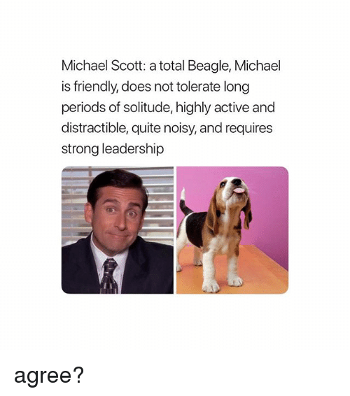 Memes, Michael Scott, and Michael: Michael Scott: a total Beagle, Michael  is friendly, does not tolerate long  periods of solitude, highly active and  distractible, quite noisy, and requires  strong leadership agree?