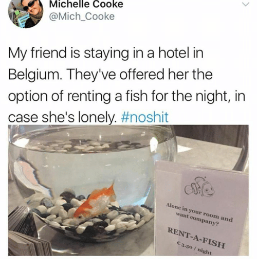 Cooke: Michelle Cooke  @Mich_Cooke  My friend is staying in a hotel in  Belgium. They've offered her the  option of renting a fish for the night, in  case she's lonely. #noshit  Alone in your room and  want company?  RENT-A-FISH  3.50 /night