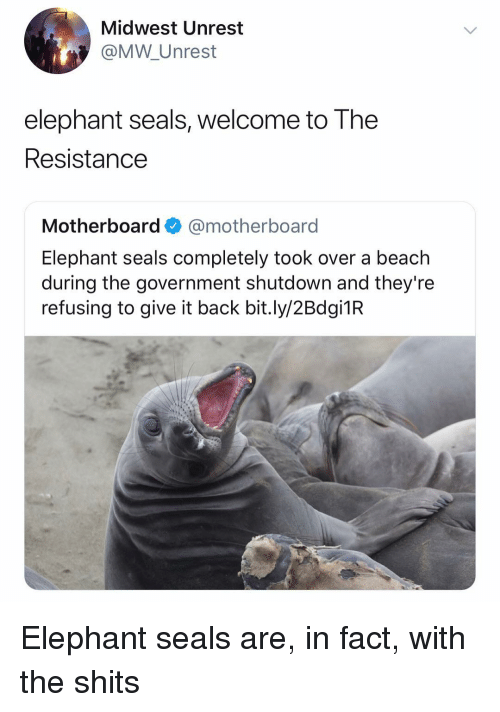 Shutdown: Midwest Unrest  @MW Unrest  elephant seals, welcome to The  Resistance  Motherboard@motherboard  Elephant seals completely took over a beach  during the government shutdown and they're  refusing to give it back bit.ly/2Bdgi1R Elephant seals are, in fact, with the shits