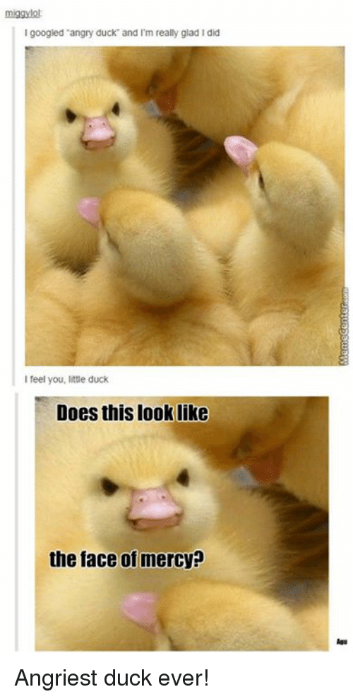 Angriest: miggylol  googled angry duck and I'm really glad l did  I feel you, little duck  Does this look like  the face of mercy? Angriest duck ever!
