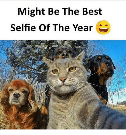 Memes, Selfie, and Best: Might Be The Best  Selfie Of The Year