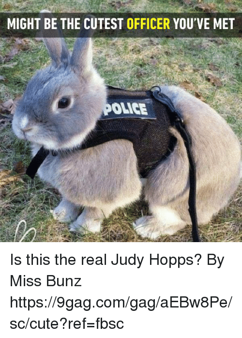 9gag, Cute, and Dank: MIGHT BE THE CUTEST OFFICER YOU'VE MET  OLICE Is this the real Judy Hopps?   By Miss Bunz  https://9gag.com/gag/aEBw8Pe/sc/cute?ref=fbsc