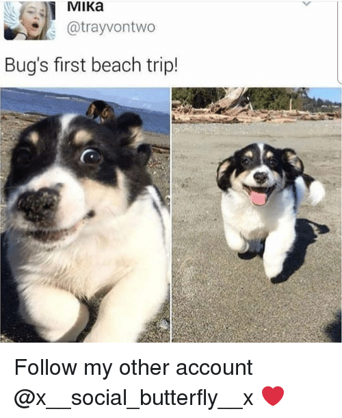 mika: MIKa  atrayvontwo  Bug's first beach trip! Follow my other account @x__social_butterfly__x ❤