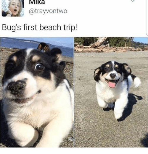 Memes, Beach, and 🤖: MIka  @trayvontwo  Bug's first beach trip!