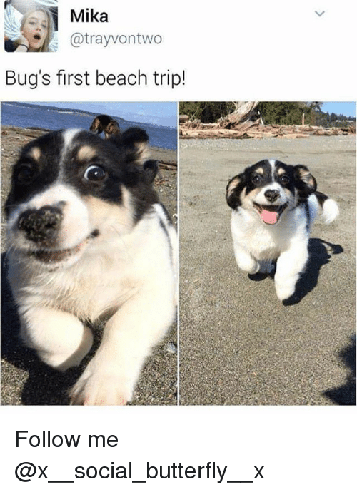 mika: Mika  @trayvontwo  Bug's first beach trip! Follow me @x__social_butterfly__x