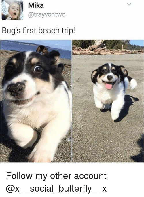 mika: Mika  @trayvontwo  Bug's first beach trip! Follow my other account @x__social_butterfly__x