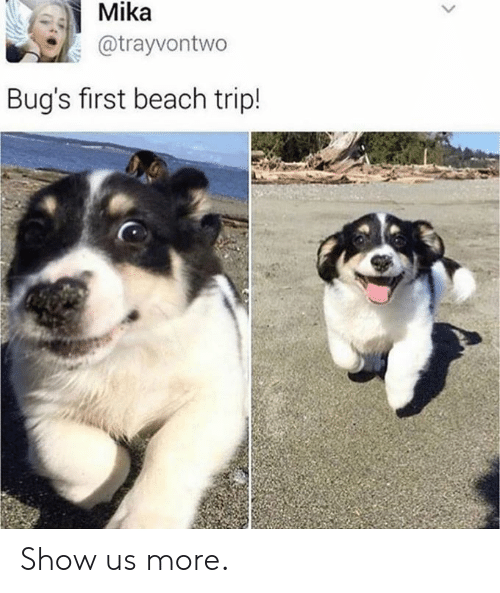 mika: Mika  @trayvontwo  Bug's first beach trip! Show us more.