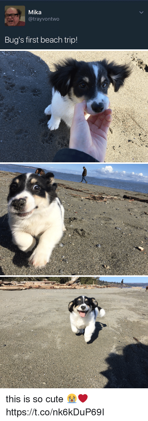 mika: Mika  @trayvontwo  Bug's first beach trip! this is so cute 😭❤️ https://t.co/nk6kDuP69I