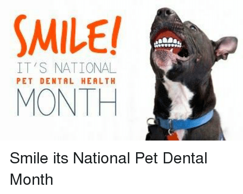 Memes, Smile, and 🤖: MILE!  MONTH  IT'S NATIONAL  PET DENTAL HEALTH Smile its National Pet Dental Month