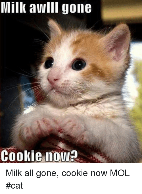 Memes, 🤖, and Cat: Milk awllI gone  Cookie nowa Milk all gone, cookie now         MOL   #cat