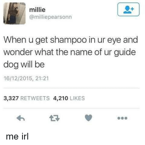 Dank Memes, Irl, and Guide: millie  @milliepearsonn  When u get shampoo in ur eye and  wonder what the name of ur guide  dog will be  16/12/2015, 21:21  3,327  RETWEETS 4,210  LIKES me irl