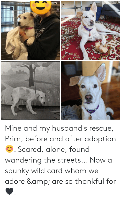 husbands: Mine and my husband's rescue, Prim, before and after adoption 😊. Scared, alone, found wandering the streets... Now a spunky wild card whom we adore & are so thankful for 🖤.