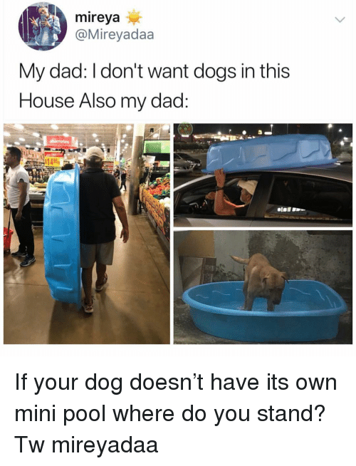Dad, Dogs, and Memes: mireya  @Mireyadaa  My dad: I don't want dogs in this  House Also my dad If your dog doesn't have its own mini pool where do you stand? Tw mireyadaa