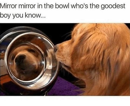 Mirror, Bowl, and Boy: Mirror mirror in the bowl who's the goodest  boy you know...