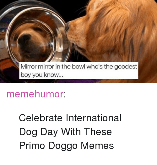 """Doggo Memes: Mirror mirror in the bowl who's the goodest  boy you know <p><a href=""""http://memehumor.net/post/164649653752/celebrate-international-dog-day-with-these-primo"""" class=""""tumblr_blog"""">memehumor</a>:</p>  <blockquote><p>Celebrate International Dog Day With These Primo Doggo Memes</p></blockquote>"""