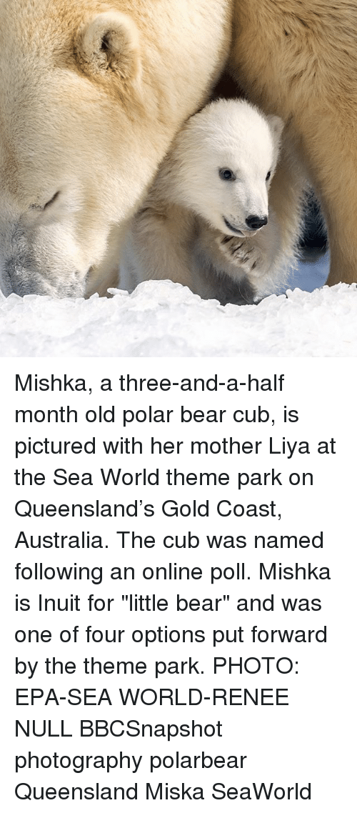 "little bear: Mishka, a three-and-a-half month old polar bear cub, is pictured with her mother Liya at the Sea World theme park on Queensland's Gold Coast, Australia. The cub was named following an online poll. Mishka is Inuit for ""little bear"" and was one of four options put forward by the theme park. PHOTO: EPA-SEA WORLD-RENEE NULL BBCSnapshot photography polarbear Queensland Miska SeaWorld"