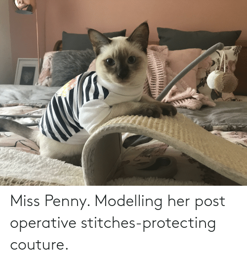 modelling: Miss Penny. Modelling her post operative stitches-protecting couture.