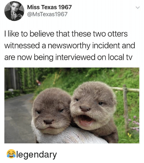 Otters: Miss Texas 1967  @MsTexas1967  I like to believe that these two otters  witnessed a newsworthy incident and  are now being interviewed on local tv 😂legendary