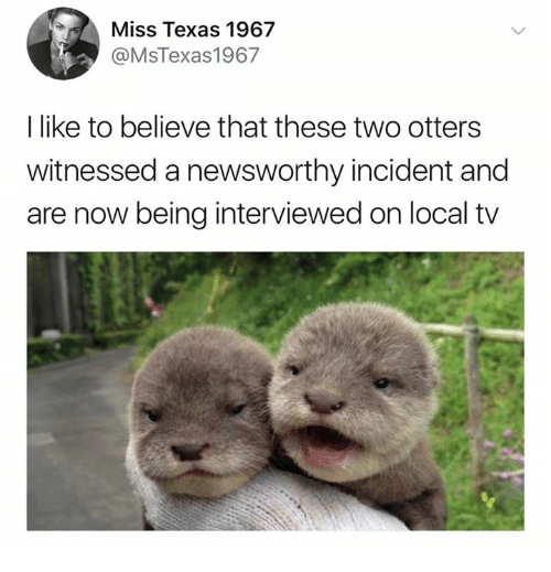 Otters: Miss Texas 1967  @MsTexas1967  I like to believe that these two otters  witnessed a newsworthy incident and  are now being interviewed on local tv