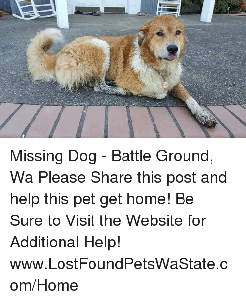 missing dog Search or post lost and found pet reports what to do whom to contact for all us pets a free service since 1998.