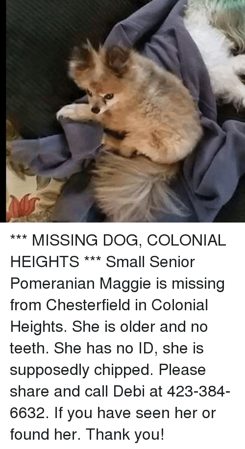 Memes, Pomeranian, and 🤖: *** MISSING DOG, COLONIAL HEIGHTS ***                  Small Senior Pomeranian   Maggie is missing from Chesterfield in Colonial Heights. She is older and no teeth.   She has no ID, she is supposedly chipped. Please share and call Debi at  423-384-6632. If you have seen her or found her.   Thank you!