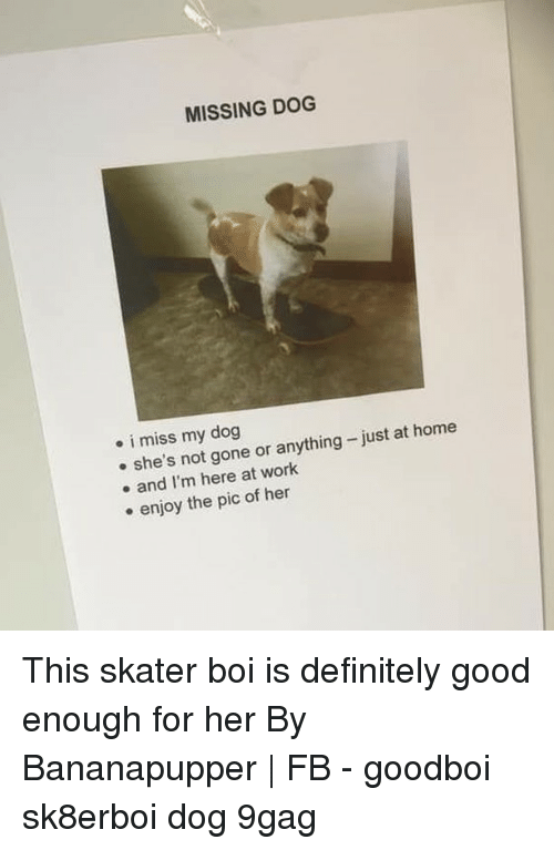 Skater: MISSING DOG  . i miss my dog  e she's not gone or anything-just at home  e and I'm here at work  e enjoy the pic of hen This skater boi is definitely good enough for her⠀ By Bananapupper | FB⠀ -⠀ goodboi sk8erboi dog 9gag