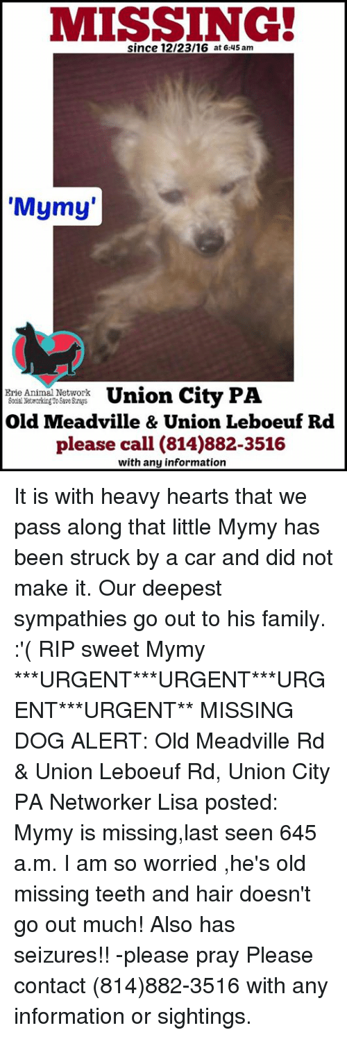 "Memes, 🤖, and Lisa: MISSING!  since 12/23/16 at 6:45 am  ""Mymy  Union City PA  Erie Animal Network  Old Meadville & Union Leboeuf Rd  please call (814)882-3516  with any information It is with heavy hearts that we pass along that little Mymy has been struck by a car and did not make it. Our deepest sympathies go out to his family.  :'( RIP sweet Mymy  ***URGENT***URGENT***URGENT***URGENT** MISSING DOG ALERT: Old Meadville Rd & Union Leboeuf Rd, Union City PA Networker Lisa posted: Mymy is missing,last seen 645 a.m. I am so worried ,he's old missing teeth and hair doesn't go out much! Also has seizures!! -please pray Please contact (814)882-3516 with any information or sightings."