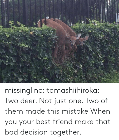 bad decision: missinglinc: tamashiihiroka:  Two deer. Not just one. Two of them made this mistake  When you  your best friend make that bad decision together.