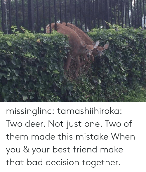 bad decision: missinglinc:  tamashiihiroka:  Two deer. Not just one. Two of them made this mistake  When you & your best friend make that bad decision together.