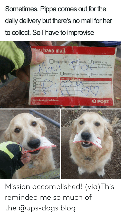 facebook.com: Mission accomplished! (via)This reminded me so much of the @ups-dogs blog