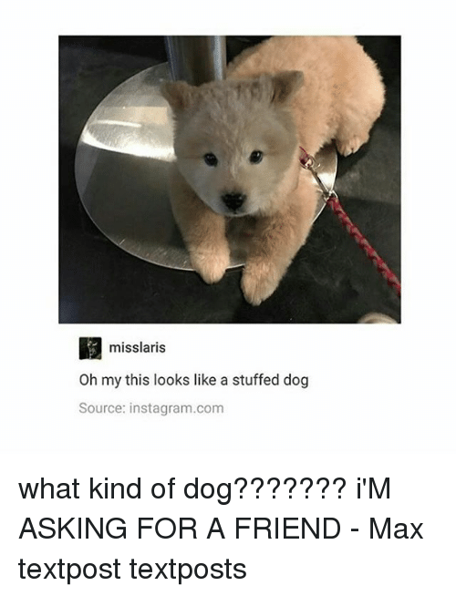 Instagram, Memes, and Asking: misslaris  Oh my this looks like a stuffed dog  Source: instagram.com what kind of dog??????? i'M ASKING FOR A FRIEND - Max textpost textposts