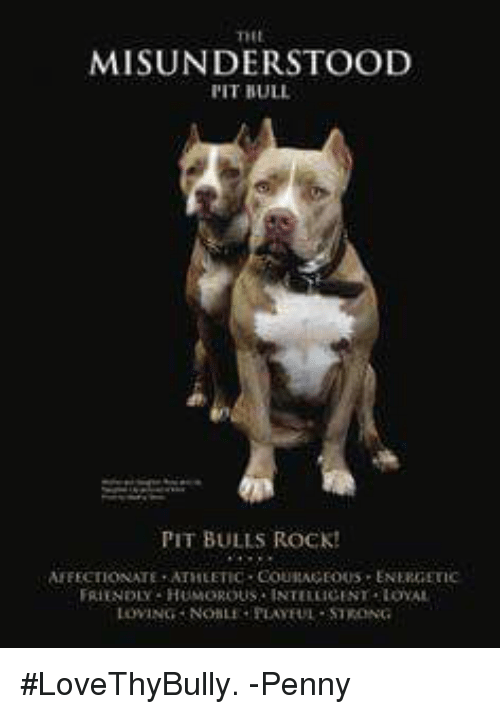 Friend Humor: MISUNDERSTOOD  l'IT BULL  PIT BULLS ROCK!  AFFECTIONATE ATHLETIC COUIAAGEOUS ENEROETIC  FRIENDLY HUMOROUS. INTELEICENT LOYAL  LOWING NONLE PLAYFUL -STRONG #LoveThyBully.           -Penny