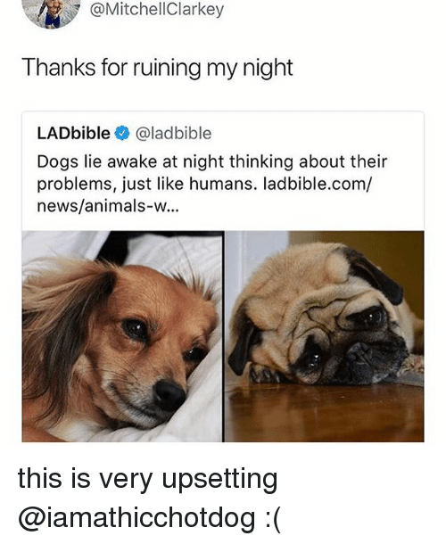Animals, Dogs, and News: @MitchellClarkey  Thanks for ruining my night  LADbible @ladbible  Dogs lie awake at night thinking about their  problems, just like humans. ladbible.com/  news/animals-w... this is very upsetting @iamathicchotdog :(