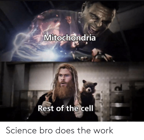 Mitochondria: Mitochondria  Rest of the cell Science bro does the work