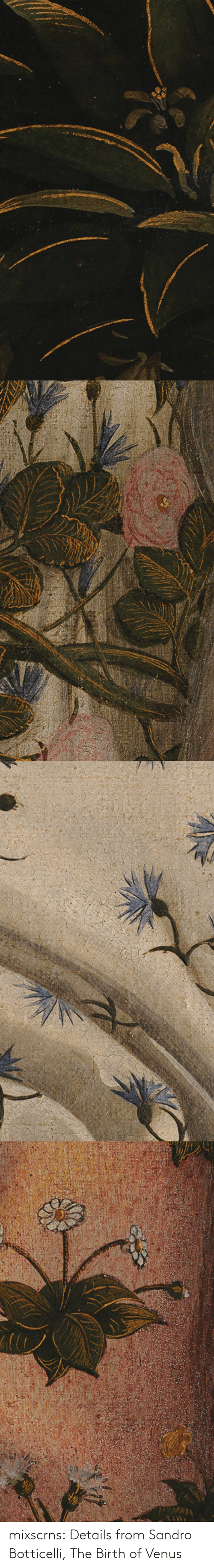 birth: mixscrns:  Details from Sandro Botticelli, The Birth of Venus