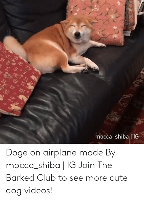 dog videos: mocca shiba IIG Doge on airplane mode By mocca_shiba | IG  Join The Barked Club to see more cute dog videos!