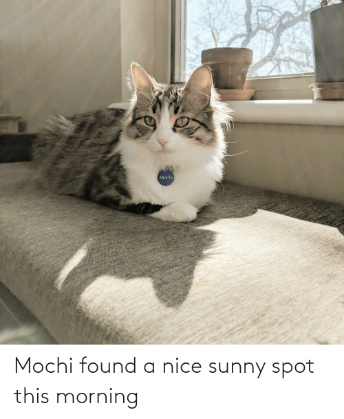 sunny: Mochi found a nice sunny spot this morning