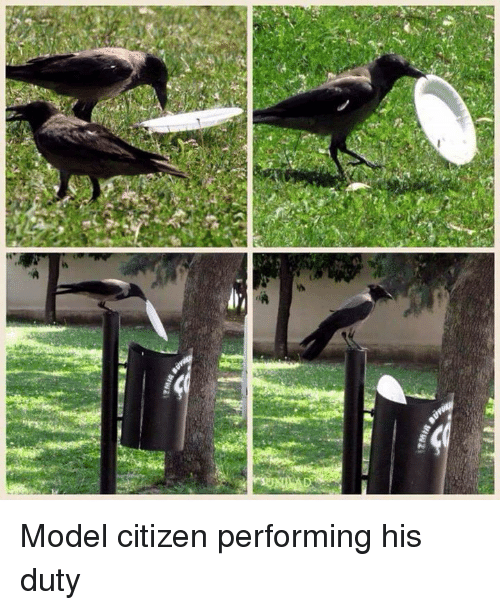 Citizen, Model, and Performing: Model citizen performing his duty