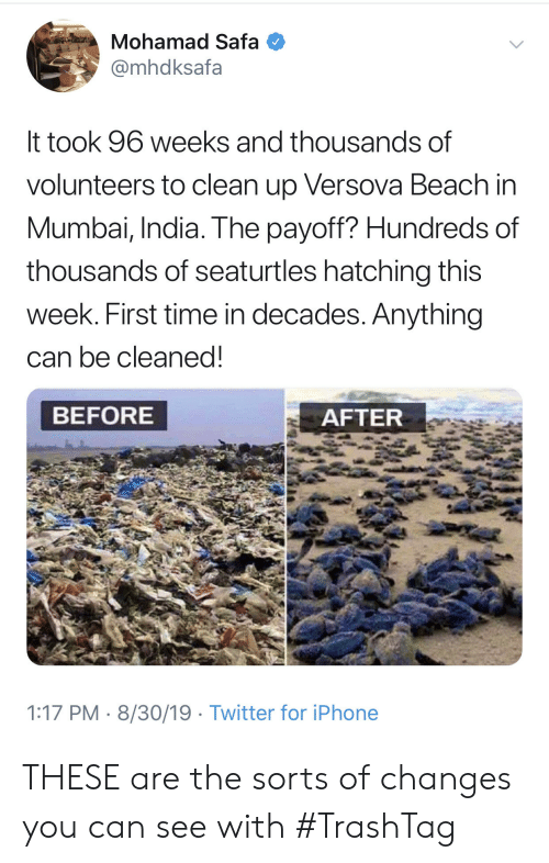 decades: Mohamad Safa  @mhdksafa  It took 96 weeks and thousands of  volunteers to clean up Versova Beach in  Mumbai, India. The payoff? Hundreds of  thousands of seaturtles hatching this  week. First time in decades. Anything  can be cleaned!  BEFORE  AFTER  1:17 PM 8/30/19 Twitter for iPhone THESE are the sorts of changes you can see with #TrashTag
